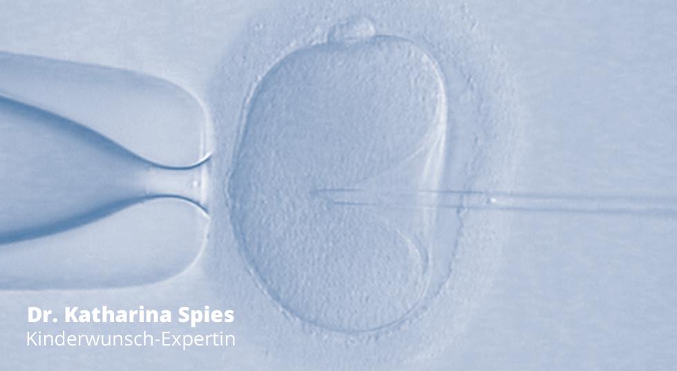Was passiert mit den Embryonen