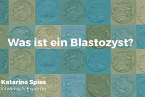 Was ist ein Blastozyst?