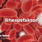 Verschiedene Blutgruppen und Rhesusfaktoren
